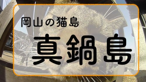 岡山の猫島「真鍋島」まったりとした時間の流れる素敵な島でした。【岡山旅行日記06】