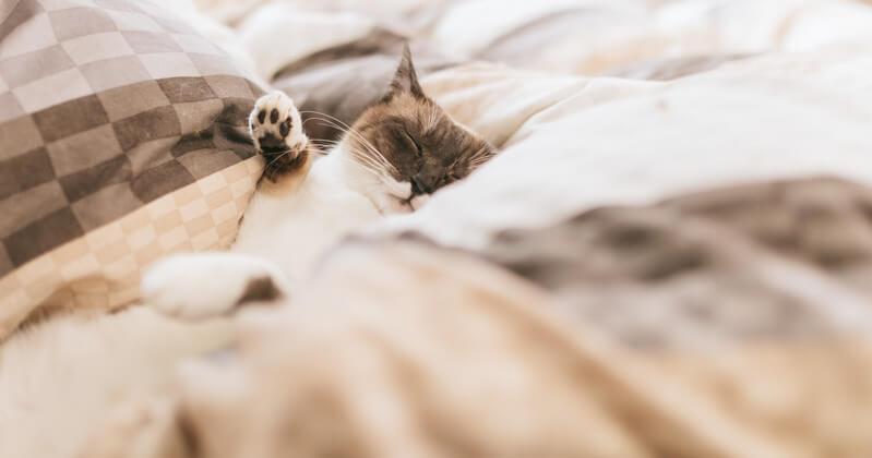 睡眠 眠り 良質 リラックス ハーブティー