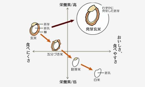 発芽玄米 説明 解説 一般社団法人 高機能玄米協会
